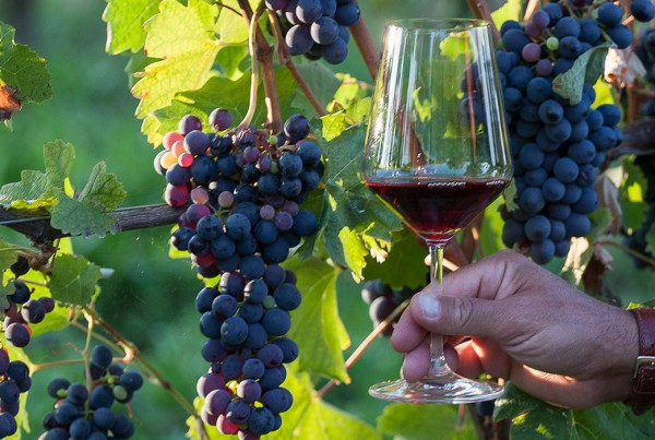 grapes_glass